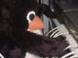 Evil penguin rewires the net