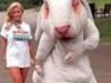 Stop animal tests