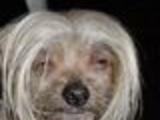 Styled dog