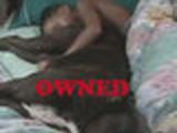 Owned DogSleep