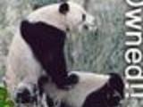 Owned Panda
