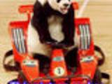Understand Panda