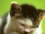 YouAre KittenHurter