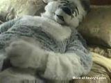Wolf Masturbating - Wolf Videos