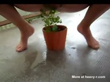 Watering The Plants - Piss Videos