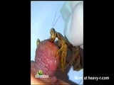 Mantis Munching On Nipple - Bloody Videos